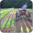 The Ethics of Food, Farming, and Community